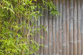 How To Create An Outdoor Bamboo Privacy Screen Home Logic Uk