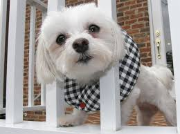 Puppy Bumpers Prevents Small Dogs From Going Through Fences And Railings Modern And Contemporary Pet Products Updated Daily Coolpetproducts Com