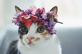 أجمل صور قطط بطوق 2020 Hd مجلة البرونزية