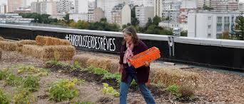 urban farming is flourishing during