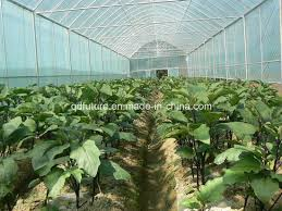 china organic fertilizer grow vegetable