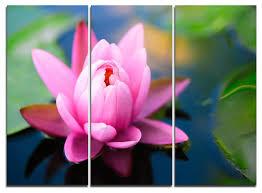 large lotus flower in the pond metal