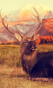 deer live wallpapers 1 0 apk
