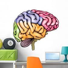 Amazon Com Wallmonkeys Human Brain Anatomy Wall Decal Peel And Stick Educational Graphics 36 In W X 32 In H Wm98436 Furniture Decor