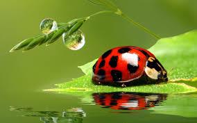 ladybug wallpaper desktop 2560x1600