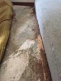 View Termites In Carpet  Pics