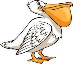 Pelican Standing Creative For Kids