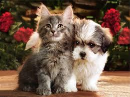 48 kitten and puppy wallpaper on