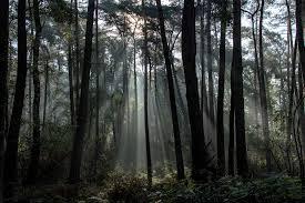 Lichtbündel im Herbstwald | Die Schlenderer