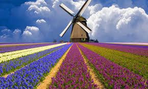 Kết quả hình ảnh cho làng Zaanse Schans