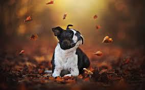 autumn bokeh dogs dog