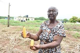 Flooding wreaking havoc on Ida Barnes' farm
