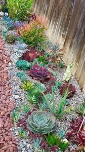 25 catchy outdoor succulent garden ideas