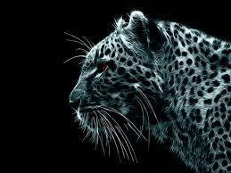 free hd snow leopard wallpaper