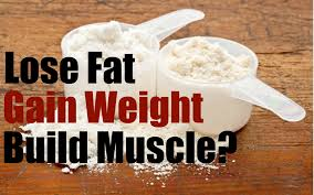 do protein shakes help you lose weight