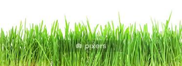 Green Grass Wall Decal Pixers We Live To Change