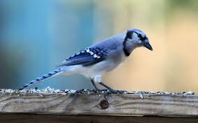 صور طيور Hd خلفيات طيور ملونة جميلة ميكساتك