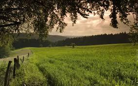 طبيعة صورة فوتوغرافية الأشجار نجيل خضرة خلفيات سطح المكتب Hd