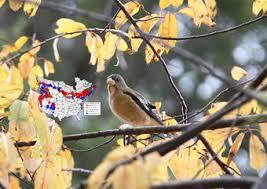 North American Breeding Bird Survey