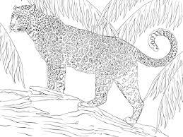 Jaguar Kleurplaat Gratis Kleurplaten Printen