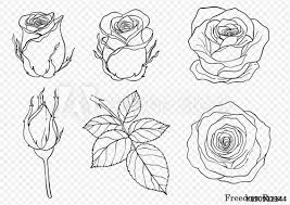 hand drawing beautiful flower on white