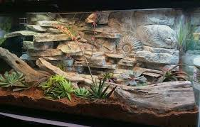 30 diy bearded dragon terrarium ideas