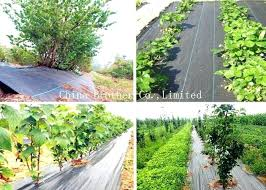 vegetable garden weed control fabric