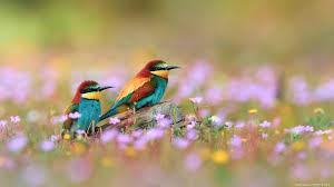 شبكه سناره مدونه سنارة موقع سناره خلفيات طيور ملونه