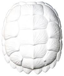 large faux resin turtle shell beach