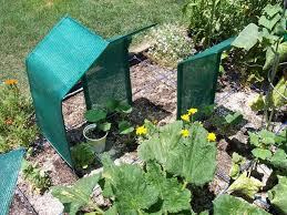 Shade Cloths On Wire For Temporary Shade On Plants Shade Cloth Garden Shade Garden Plants