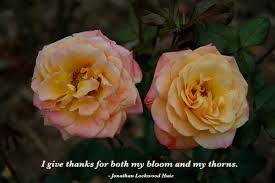 i give thanks for both my bloom and my thorns by jonathan