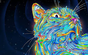 hd wallpaper outer space cats rainbows