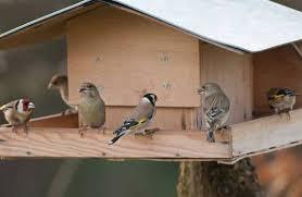 construire une cabane à oiseaux