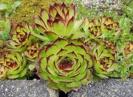 12 best perennials for full sun