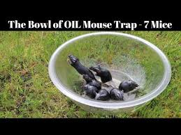 simple no kill trap for mice rats
