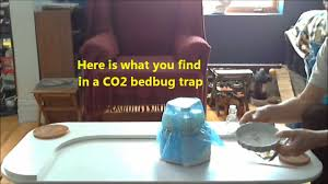 step by step the co2 bedbug trap