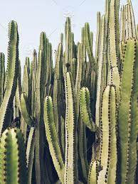 plant backgrounds cactus plants