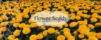 vegetable seeds in india flower seeds