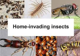 insects invading your pennsylvania