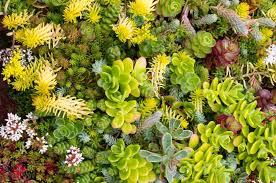 inhabitat green design innovation