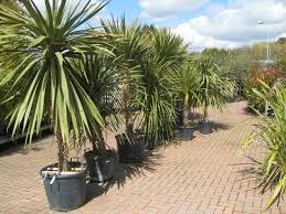 picture of haskins garden centre