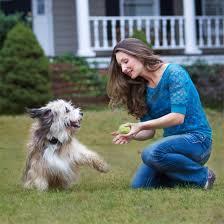 Stay Play Wireless Electric Dog Fence Dog Sense New Zealand