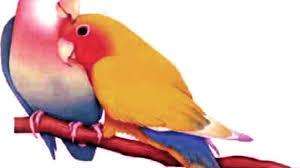 صور طيور رومانسية تهوس صورة طيور على شكل قلب صباح الورد