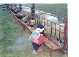 Fence Line Feeder Sheep Feeders Goat Feeder Goat Barn