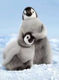 Silly penguins   Baby animals, Animals, Cute animals
