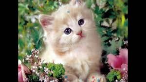 صور قطط جميلة اروع الصور لقطط كيوت رمزيات