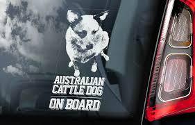 Australian Cattle Dog Car Sticker Blue Heeler Window Sign Decal Gift Pet V02 Ebay
