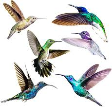 Amazon Com Hummingbird Window Clings Anti Collision Decals To Prevent Bird Strikes On Doors Windows Static Uv Resistant Non Adhesive Vinyl Cling Deterrent Decal Glass Decor To