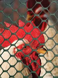 Poultry Fence Poultry Fence Tenax