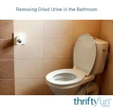 removing dried urine in the bathroom
